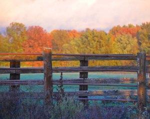 feedlot fence