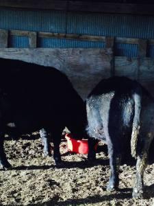 bull stress tub